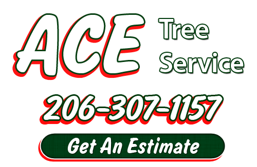 Seattle Tree Removal