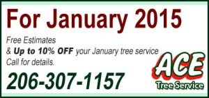 jan-tree-service-seattle
