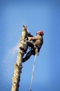 Tree Removal Services in Juanita