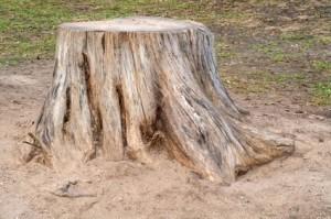 seattle stump removal