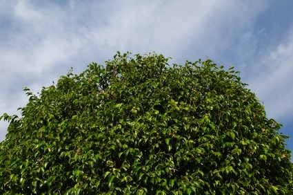Seattle tree services