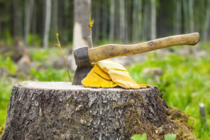 Tree Removal Service in Sammamish