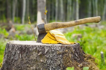 Ace Tree Service Stump Removal