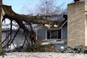 Emergency Tree Service in Seattle, WA