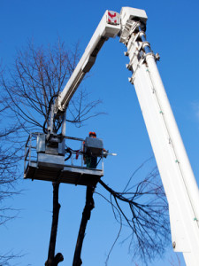 Tree Removal in Kenmore