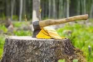 eastside-stump-removal