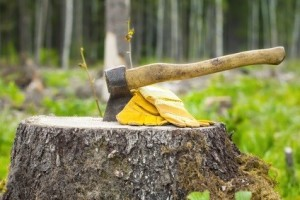 Tree Removal Service in Clyde Hill