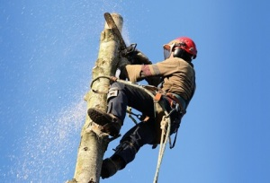 Dangerous Tree Removal Services in Seattle