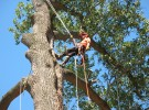 seattle tree care work